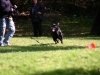 2012-09-30_hundetraining_45