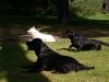 2012-09-30_hundetraining_79